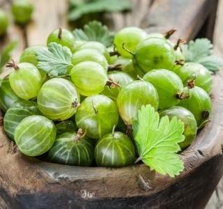 Angrešt plný vitamínů a minerálů