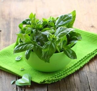 Bylinky a jejich využití v kuchyni