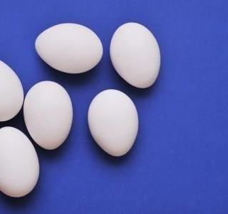 Co bylo dříve vejce nebo slepice?