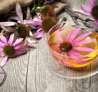 Echinacea purpurea a její zásadní vliv na imunitu