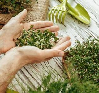 Microgreens - vypěstujte si doma zdravou zeleninu i bez zahrádky…