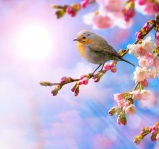 Nalaďte se na jaro!
