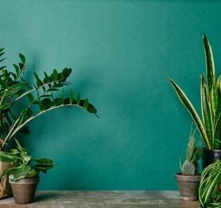 Pět rostlin pro váš klidný a hluboký spánek