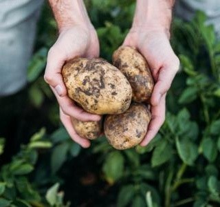 Skromné, ale v podstatě nenahraditelné. Zemáky, zemčátka, bandory, erteple nebo krumple, prostě brambory. Tisíckrát  jiné a pokaždé skvělé.